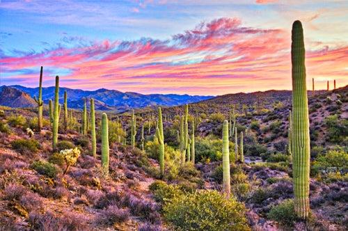 Phoenix, AZ landscape
